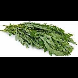 Natural Green Agathi keerai seeds sesbania grandiflora seed, For Growing