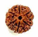 SSGJ 100% Natural Lab Tested 6 Mukhi Rudraksha Shree Shyam Gems And Jewellery