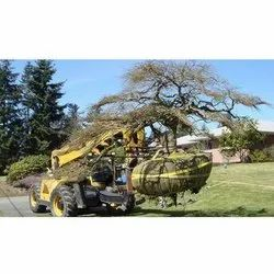 3-5 Days Tree Transplanting Services, For Garden