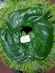 Fresh Betel Leaves