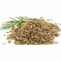 Bael Seeds
