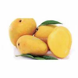 Yellow Organic Nawab Mangoes, Packaging Type: Carton, Packaging Size: 10 Kg
