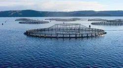 Aquaculture Business Plan Development Service