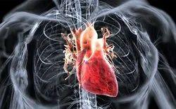 Cardiology and Cardiothoracic Surgery