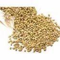 Gokul 6 Month Coriander Seeds