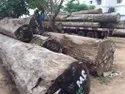 Vengai Wood