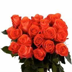 Coral / Tia Rose