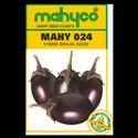 Brinjal Hybrid Mahy 024