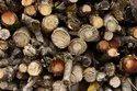 Babool firewood Supplier india