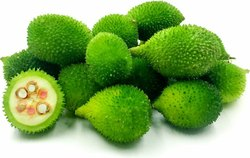Hybrid Green Kantola Seeds, Packaging Type: Plastic