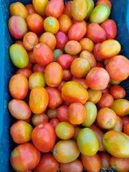 Hybrid Tomatos