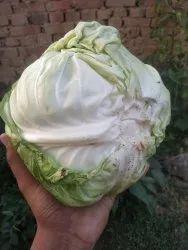 Cabbage Vegetable, Packaging Type: Gunny Bag
