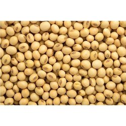 Samrat Seeds Dry Soybeans Soybean 1025, Packaging Type: Bag