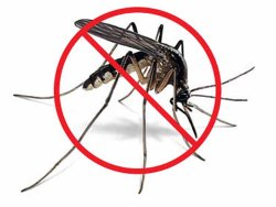 in Commercial Mosquitoes Insect Control Service